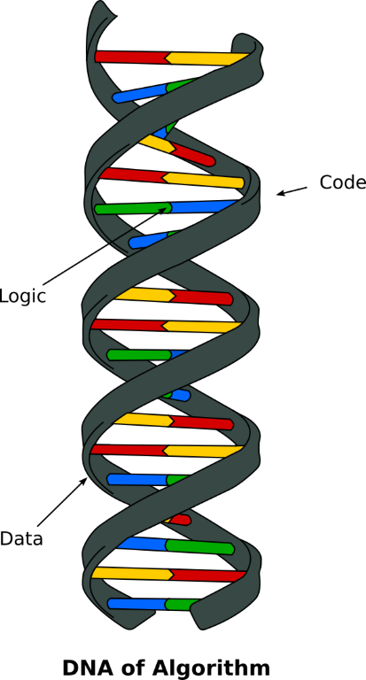 DNA of Algorithm